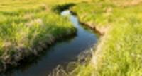 Stream winding through a field of grass